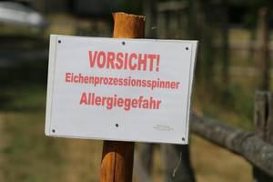 Warnschild Eichenprozessionsspinner in Ortslage - Foto Gauert.JPG
