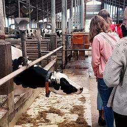 Schüler besuchen den Betrieb Heideland - Besichtigung des Kuhstalls